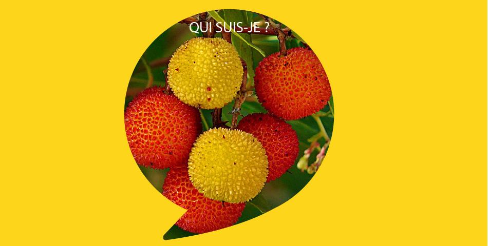 Arbousier, fruit issu de cueillette sauvage durable, dans nos soins bio La Joyeuse pour peau normale a mixte et L Optimiste pour peau seche a sensible