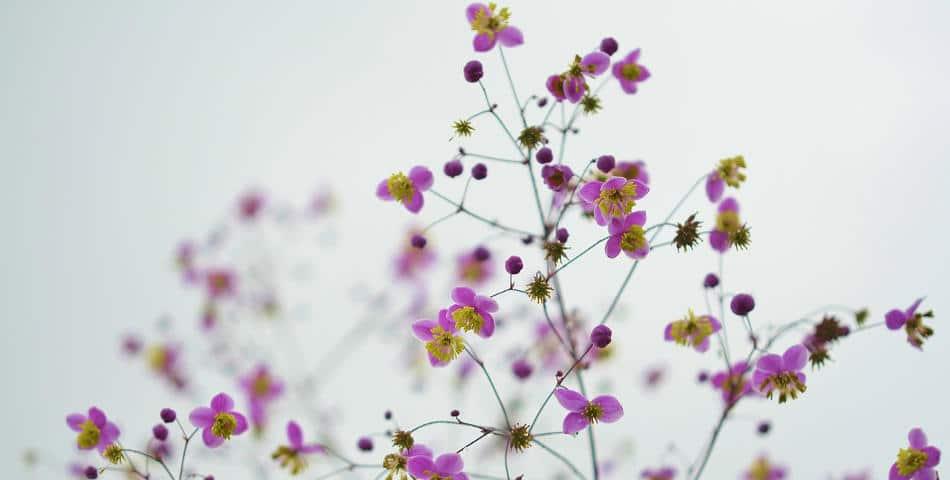 Ingrédients naturels ou d'origine naturelle, quelles différences ?
