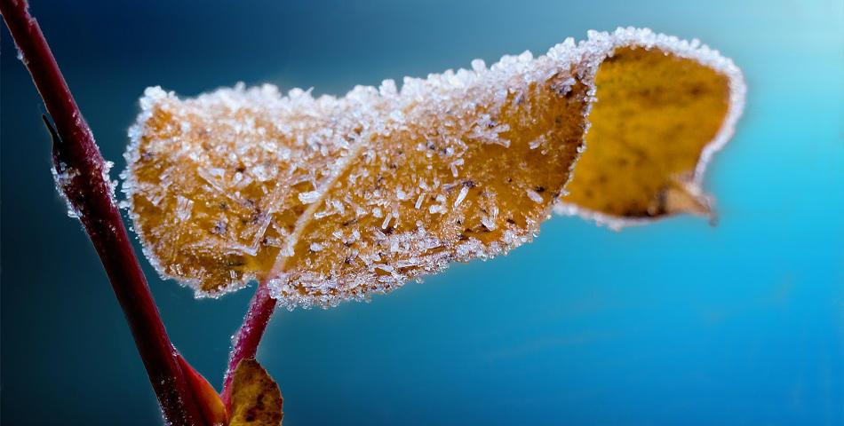 Conseils pour avoir une belle peau heureuse en hiver for Astuces maison pour une belle peau