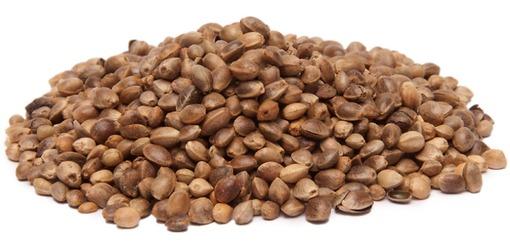 L'huile de chanvre est extraite des graines de la fleur
