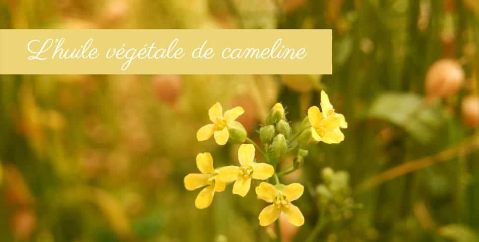 Les vertus de l huile vegetale de cameline dans la joyeuse des happycuriennes