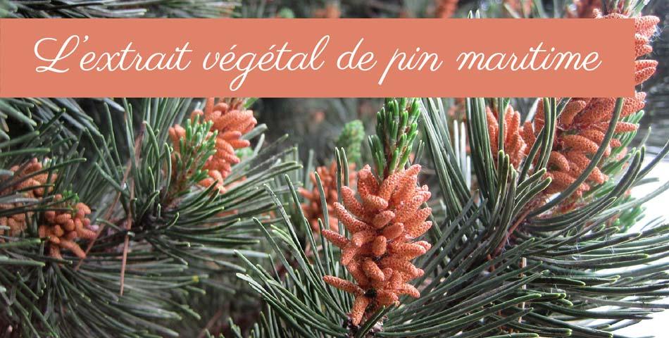 Les vertus de l'extrait végétal de pin maritime dans la gamme de soin Les Happycuriennes