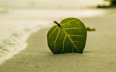 5 appli anti-stress pour être zen au quotidien (Ep 1)