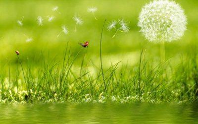 La Norme ISO 16128 sur la cosmétique bio encourage le greenwashing !