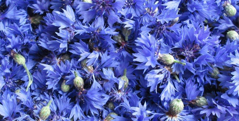 Comment choisir une eau florale adaptée à son type de peau ?