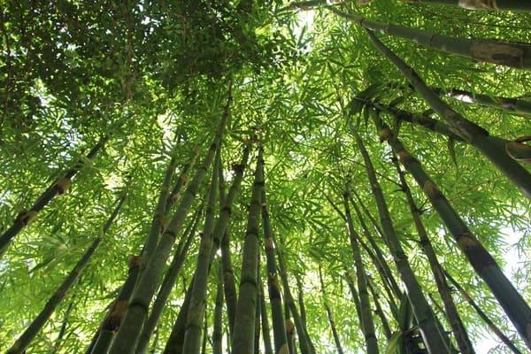 Lingettes démaquillantes réutilisables en eucalyptus