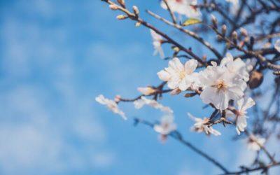 Changement de saison : une belle peau au printemps