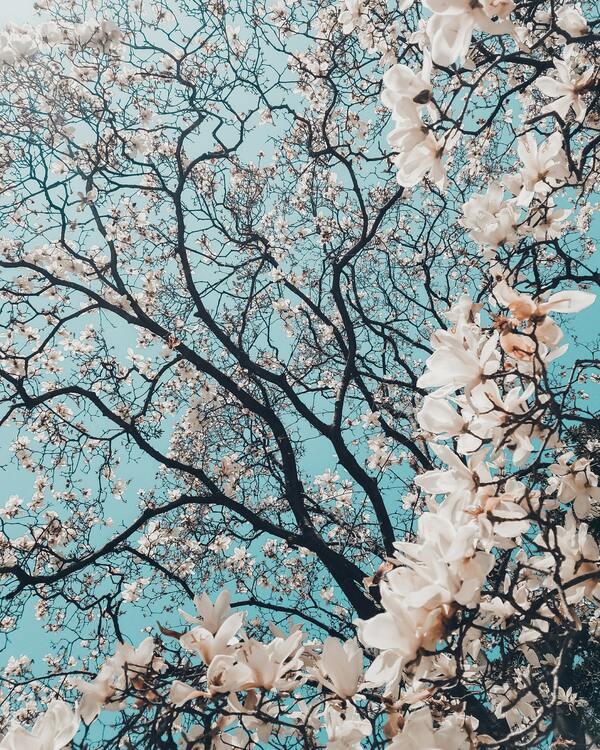 Votre routine beauté au printemps