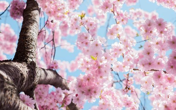Routine beauté au printemps par Les Happycuriennes
