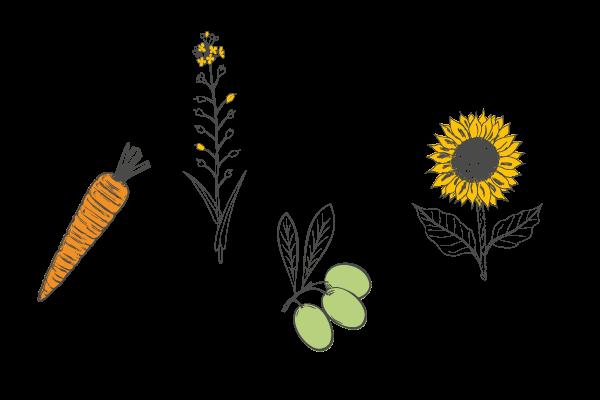 Plantes savon à froid peau mixte, Les Happycuriennes