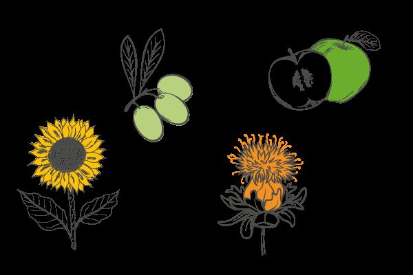 Plantes savon bio exfoliant, Les Happycuriennes