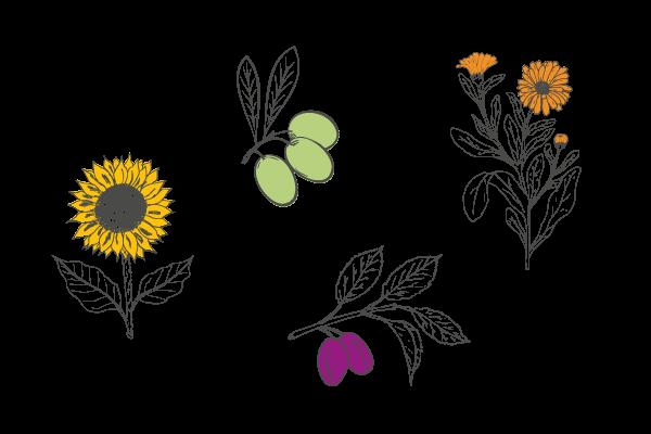 Plantes savon bio sans parfum, Les Happycuriennes
