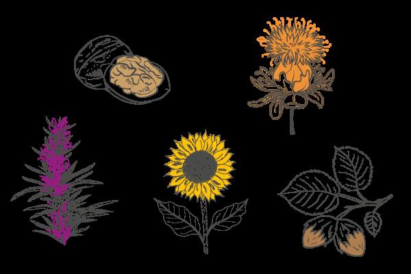Plantes de L'Insouciante, soin exfoliant corps végétal